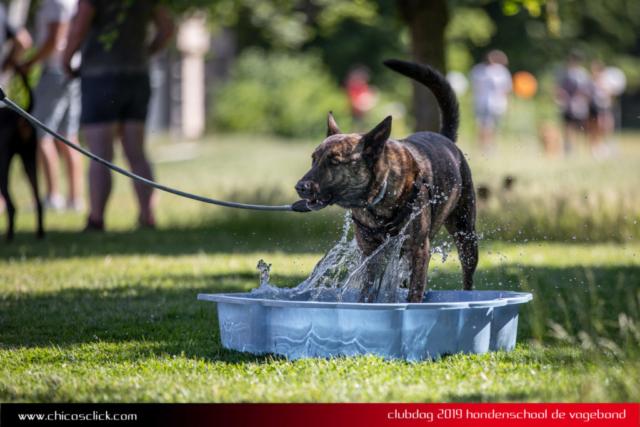 Doggydancer in het water